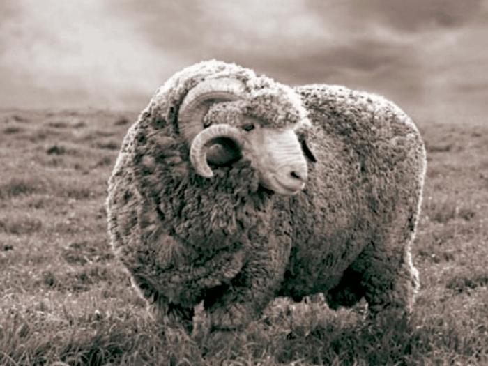 laine mérinos plaids et ponchos